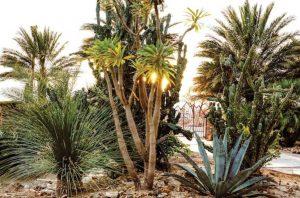 Palm Tree Cleaning Brisbane