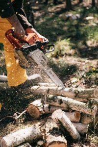 tree-&-stump-removal-sydney